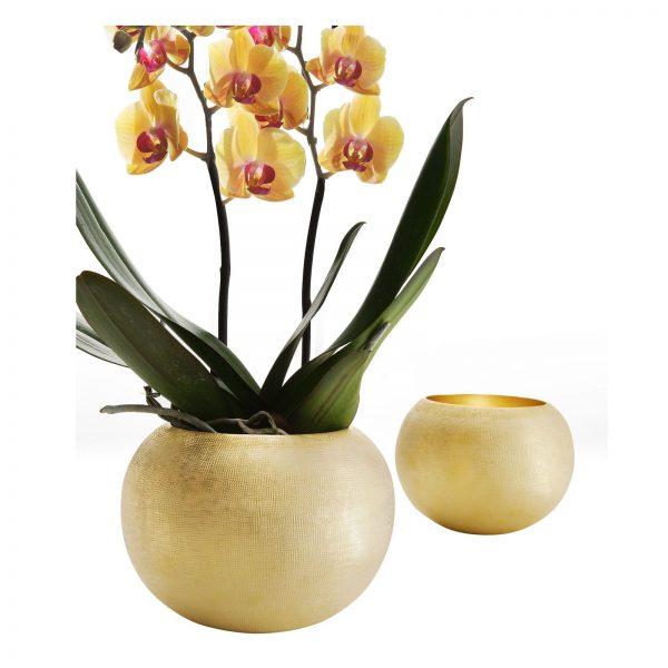 Vaso zanetto coccodoro